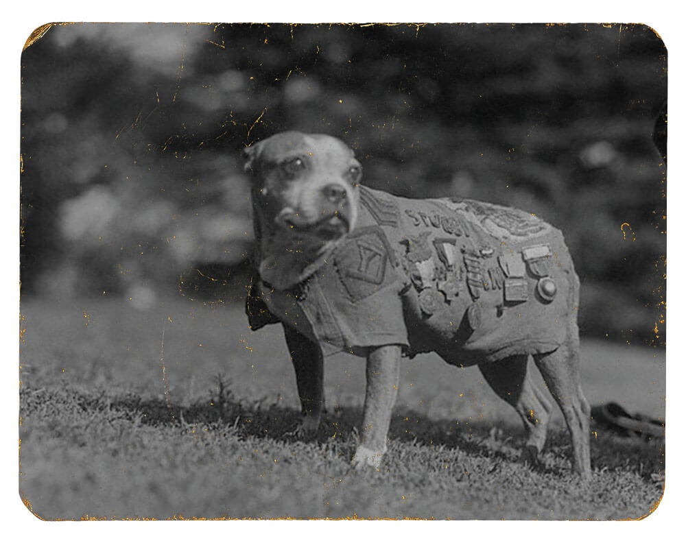 SGT Stubby during a visit to the White House to meet President Coolidge, November 1924. Photo courtesy National Museum of America, History Division of Armed Forces
